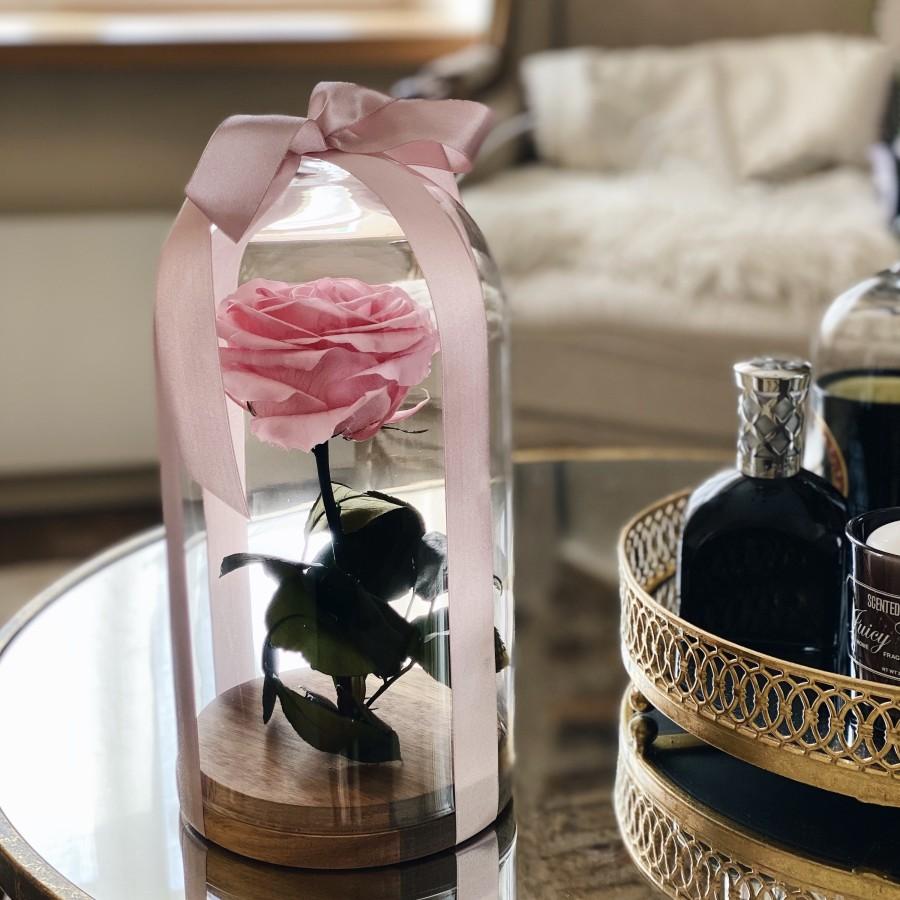 Mieganti rožė iš pasakos po kupolu (pastelinė rožinė)