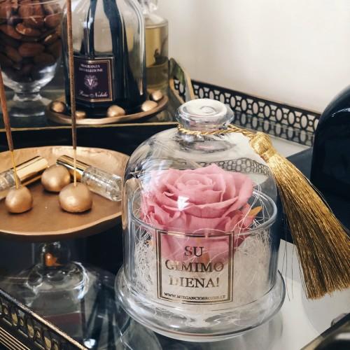 Mieganti rožė stiklo inde po gaubtu (rausva)