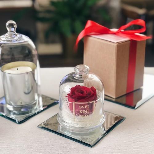Raudona mieganti rožė stiklo inde su gaubtu